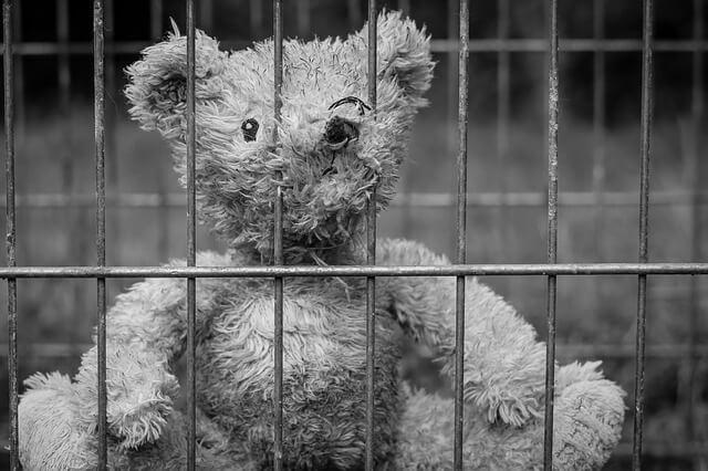 逮捕されたクマ